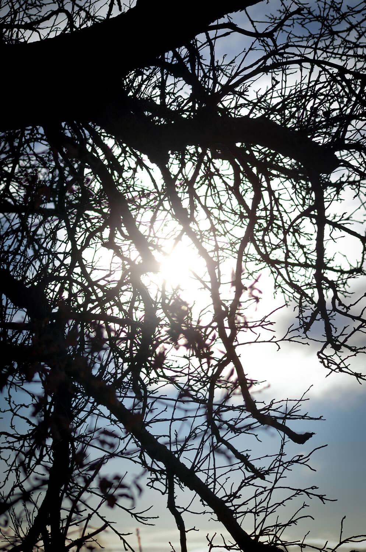 Uralter Obstbaum mit vielen kleinen Ästen
