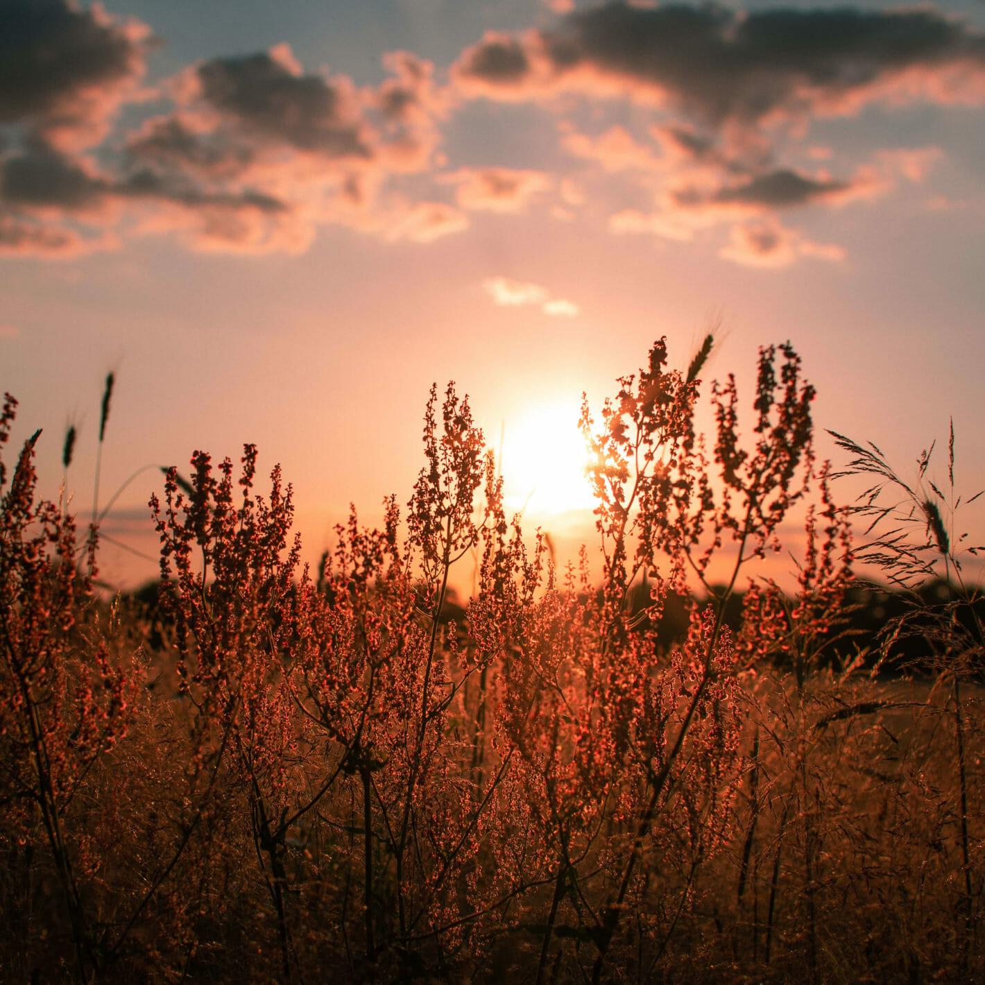 Bornimer Feldflur im Winter und Sommer