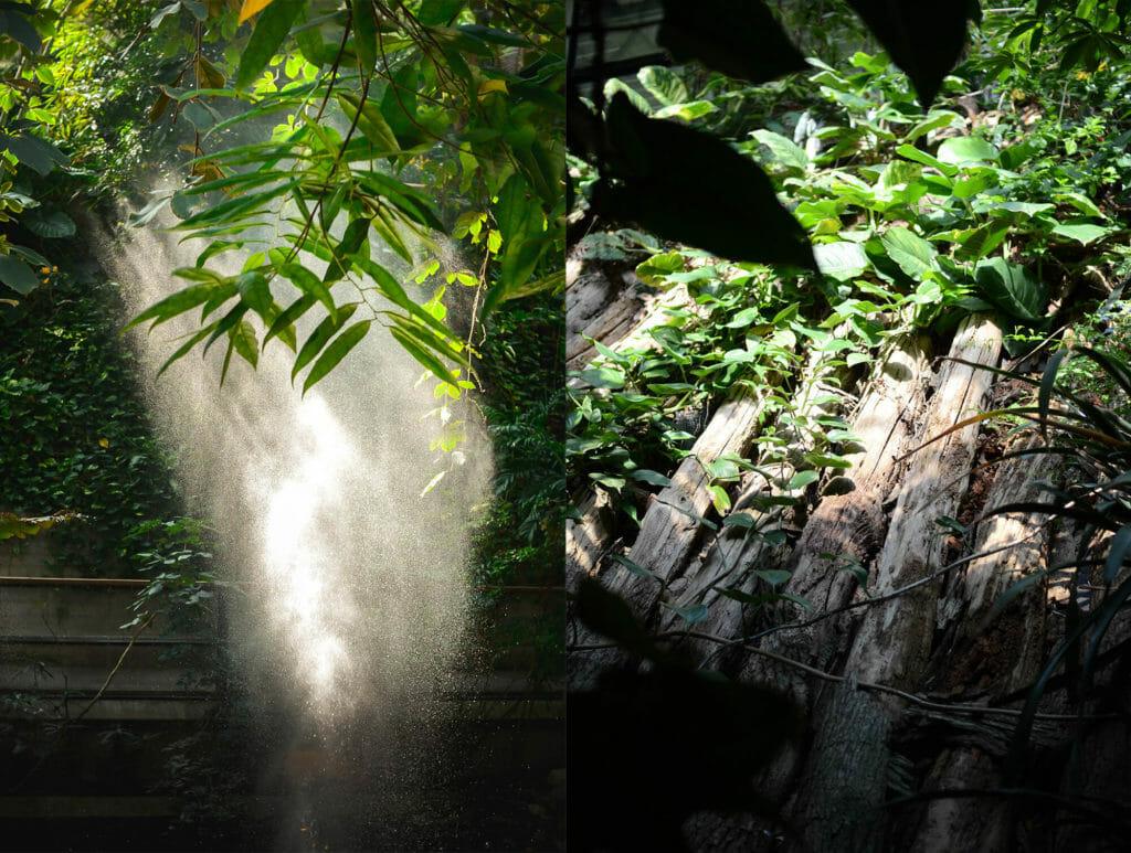 Vormittags bricht sich das Licht der Sonne in den feinen Wassertropfen des Geysirs. Das müsst ihr in der Biosphäre fotografieren - unbedingt!