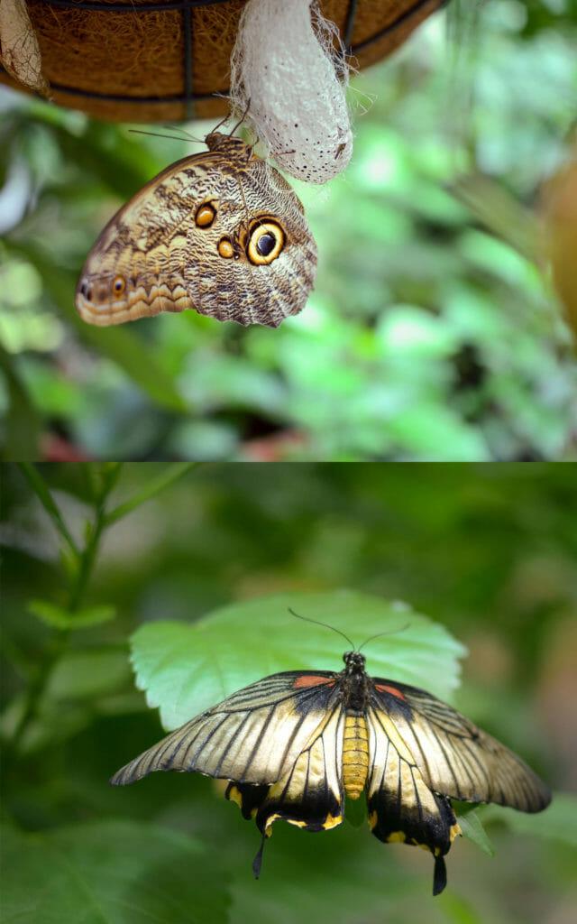 Schmetterlinge fotografieren in der Biosphäre macht Spaß, braucht manchmal aber ein ruhiges Händchen.