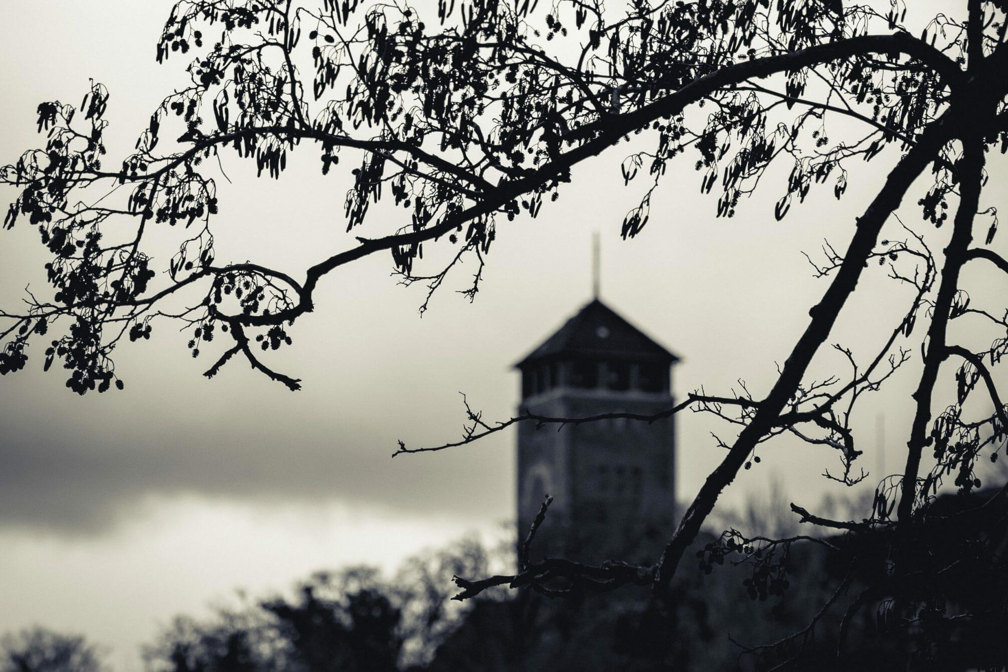 Blick auf den Brauhausberg im Dezember