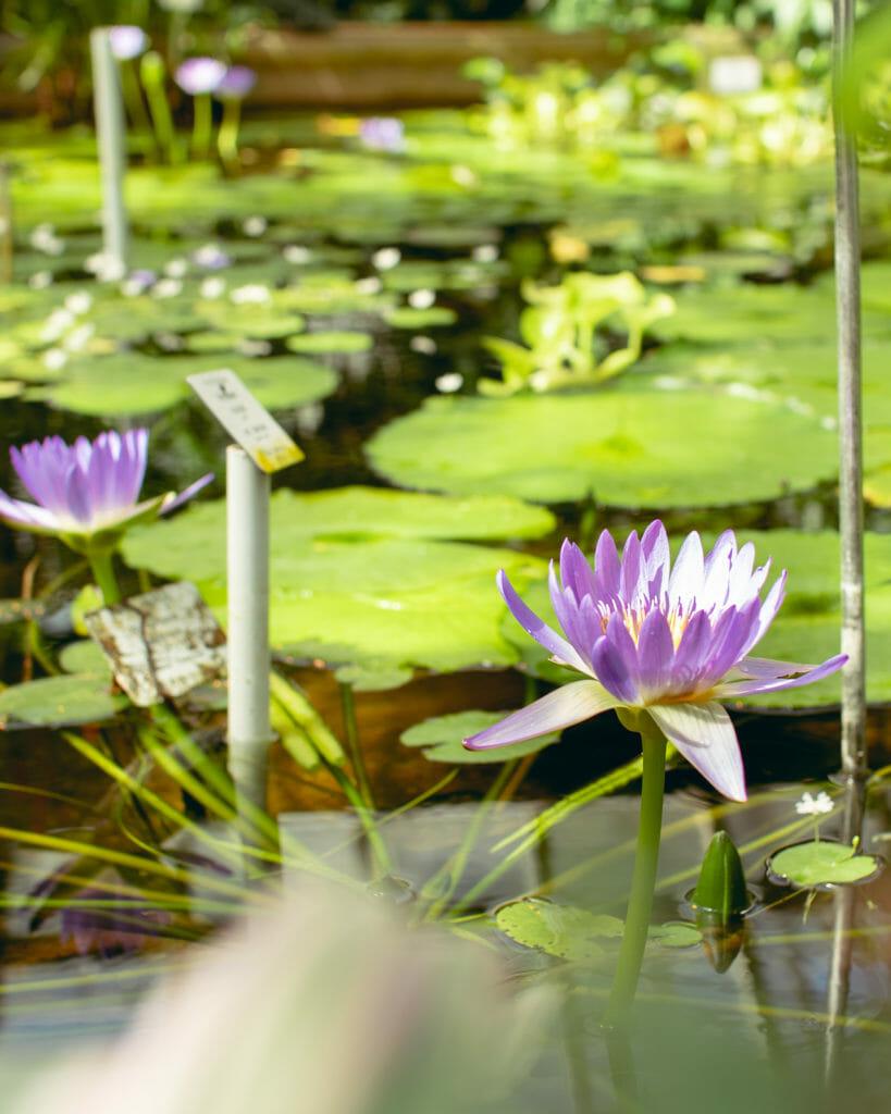 Botanischer Garten Potsdam Fotografieren In Den Gewächshäusern